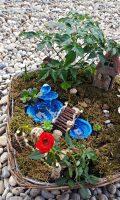 Grădină miniaturală 1 - poza 2