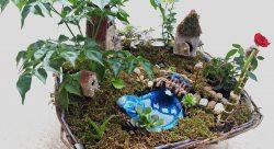 Grădină miniaturală 1 - poza 3