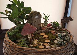 Grădină miniaturală 3