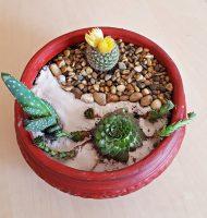 Grădină miniaturală 4 - poza 1