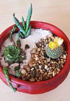 Grădină miniaturală 4 - poza 2