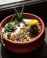 Grădină miniaturală 4 - poza 3