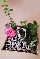 Grădină miniaturală 5