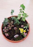Grădină miniaturală 8
