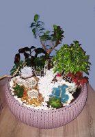 Grădină miniaturală 10